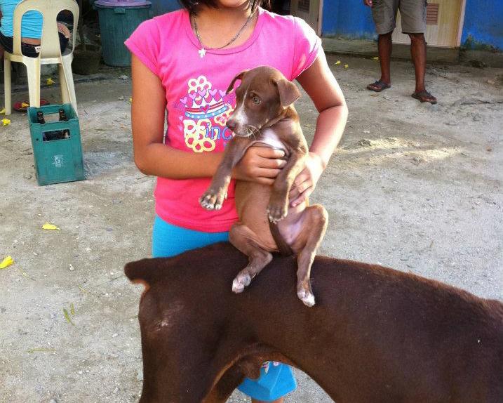 フィリピン犬