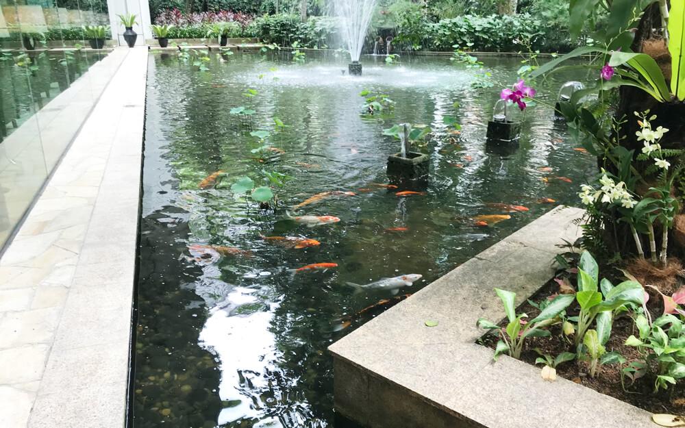 鯉が泳ぐシャングリラ